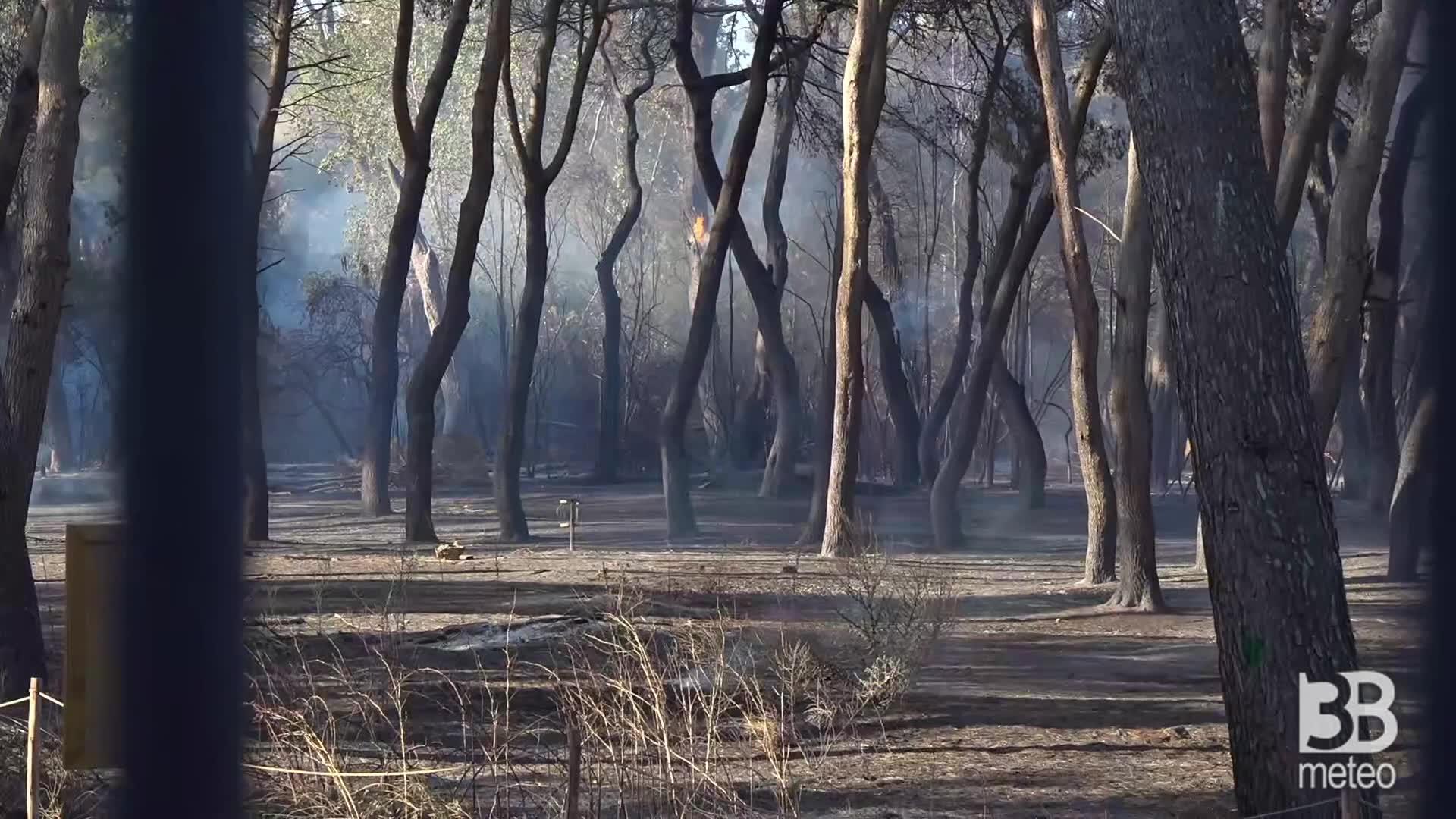 Pescara, la pineta dopo i roghi: qualche albero ancora brucia