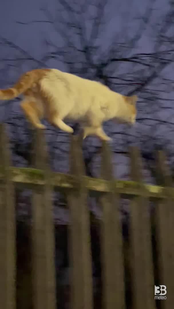 Battista il gatto equilibrista
