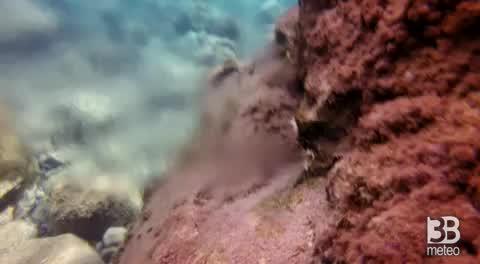 Il soffione di acqua calda nei fondali di nika'