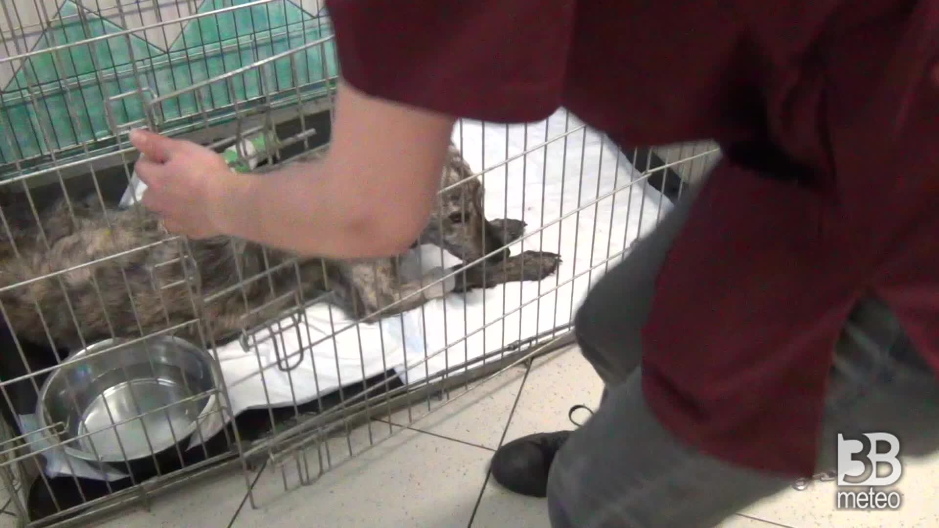 Incendi, cure ai cani feriti: gravi ustioni