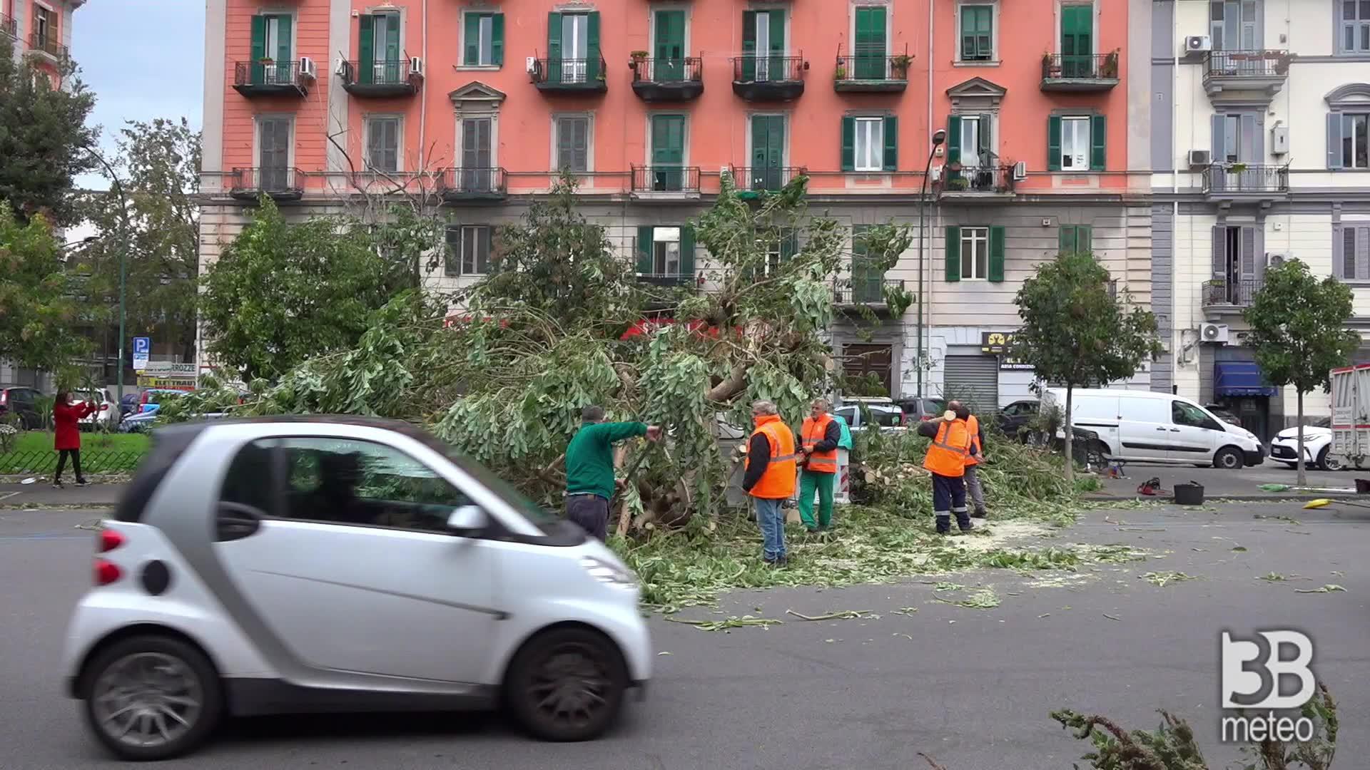Napoli, danni a Fuorigrotta: cade grosso albero
