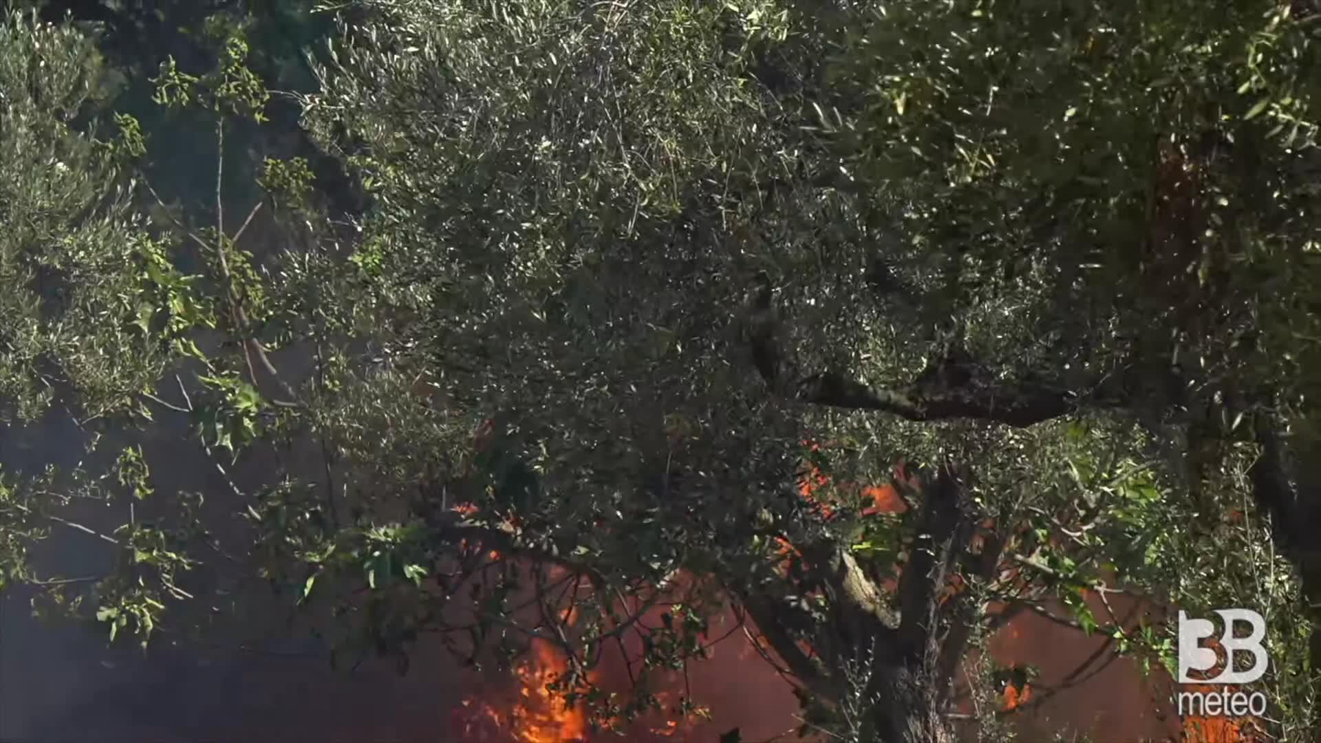 Immagine 1:Cronaca diretta INCENDI - Abruzzo, non si fermano i roghi: focolai ancora da spegnere. Video